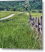 Meet Me At The Tree V Metal Print by JC Findley