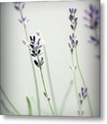 Memories Of Provence Metal Print