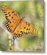 Merritt Butterfly Metal Print