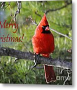 Merry Christmas Cardinal Metal Print