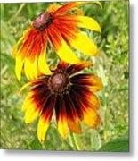 Mexican Sunflowers 2 Metal Print