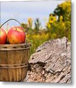 Michigan Apples Metal Print