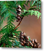 Michigan Cedar Cones Metal Print