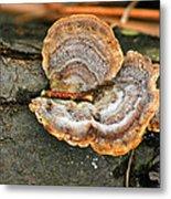 Michigan Golden Fungus Metal Print