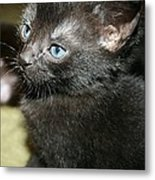Mickey's Blue Eyed Babe Metal Print by Heather  Boyd