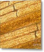 Micrograph Of A Goldfish Tail Metal Print