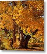 Mid-autumn Afternoon Metal Print