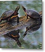 Midland Painted Turtles Metal Print