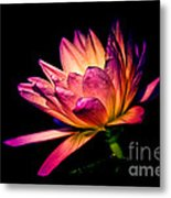 Midnight Lily Metal Print by Julie Palencia