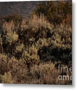 Midnight Sage Brush Metal Print