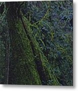 Midnight Tree By Jrr Metal Print