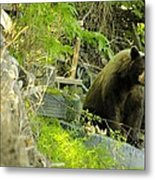 Midway - Backyard Bear Metal Print