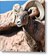 Mighty Big Horns You Have Metal Print