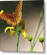 Migrating Butterfly Ser1 Metal Print