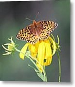Migrating Butterfly Ser3 Metal Print