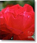 Mikado Tea Rose Metal Print