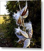 Milkweed Breeze Metal Print