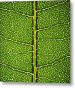 Milkweed Leaf Metal Print by Steve Gadomski