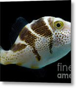 Mimic Saddle Puffer Metal Print by Dant� Fenolio