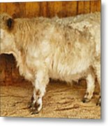 Mini Moo Metal Print