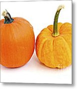 Mini Pumpkins Metal Print