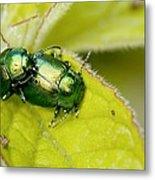 Mint Leaf Beetles Mating Metal Print