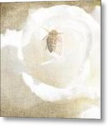 Miss Bee Haven II Metal Print
