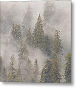 Mist In Tongass National Forest Metal Print