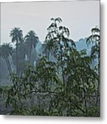 Mist Over Mhow Forest Metal Print