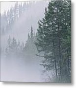 Mist Rises From An Evergreen Forest Metal Print