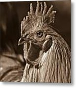 Mister Rooster From The Barnyard Metal Print
