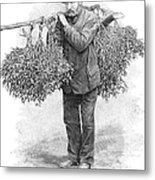 Mistletoe Gatherer, 1894 Metal Print