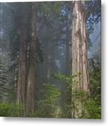 Mists Rising From Lady Bird Johnson Grove Metal Print