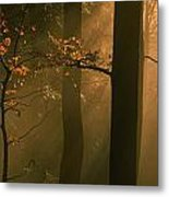 Misty Autumn Forest At Sunset Metal Print