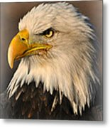 Misty Eagle Metal Print
