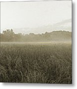 Misty Grounds Metal Print