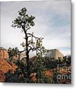 Misty Morning In Zion Canyon Metal Print