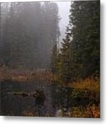 Misty Solitude Metal Print