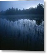 Misty View Of Taiga Forest Metal Print