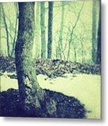 Misty Winter Woods Metal Print