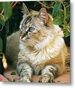 Mixed Breed Cat--mia Metal Print