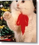 Mixed Breed Cat Reaches Out Metal Print