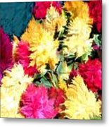 Mixed Celosias In Fall Colors Metal Print
