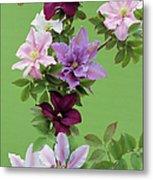 Mixed Clematis Flowers Metal Print