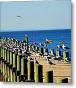Mobile Bay Meeting Of The Minds Metal Print