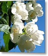 Mock Orange 4 Metal Print