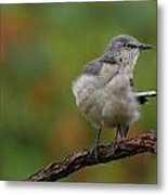 Mocking Bird Perched In The Wind Metal Print