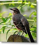 Mocking Bird Picture 3 Metal Print