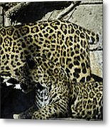 Mom And Baby Cheetah Metal Print
