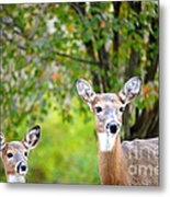Mom And Baby Deer Metal Print